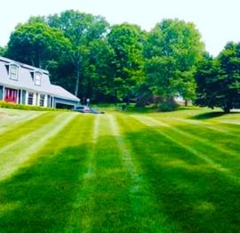 Choose Best Lawn Care Services Near Me In New York