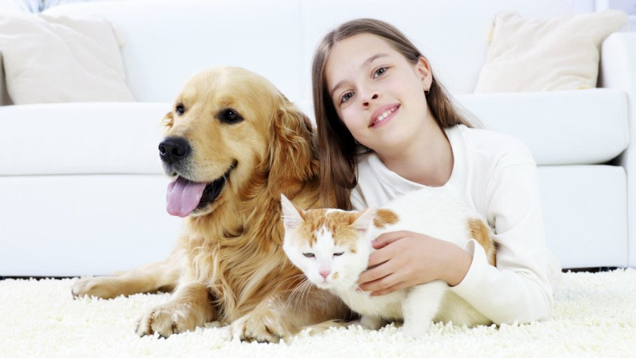 Info About Rug Proper Care Along With Carpet Cleaning Guidelines