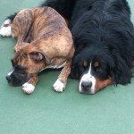 Make Your Dog Feel Good With Dog Daycare Del Mar